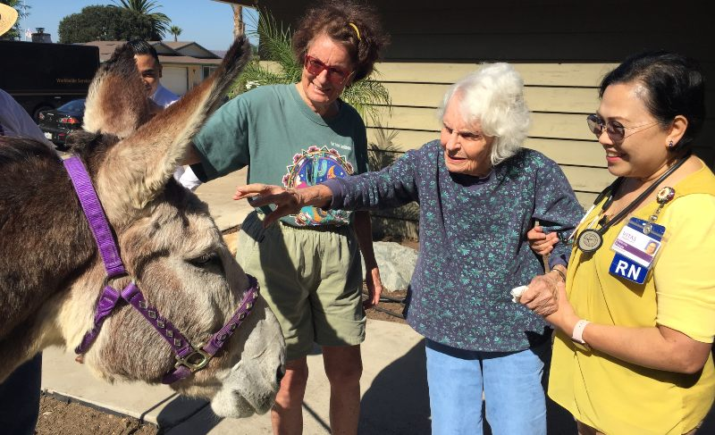 Florence pets the donkey outside