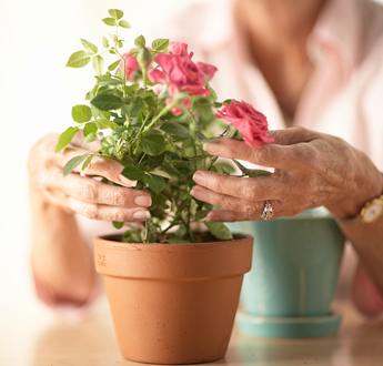 A woman tends to a flowering plant in a pot